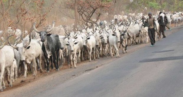 Suspected  Herdsmen behead two men in fresh Benue attack